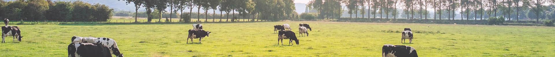 Finanzierungslösungen für Melkroboter und Milchkühe